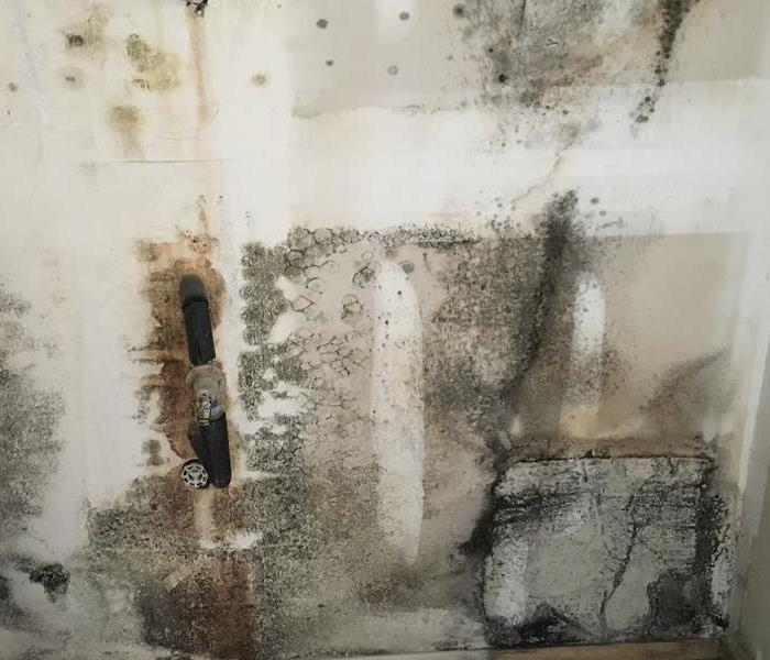 Mold on the wall.